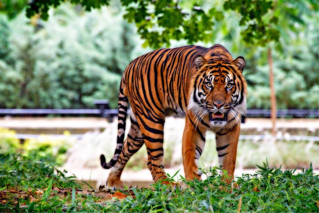 animales-peligro-extincion-planeta
