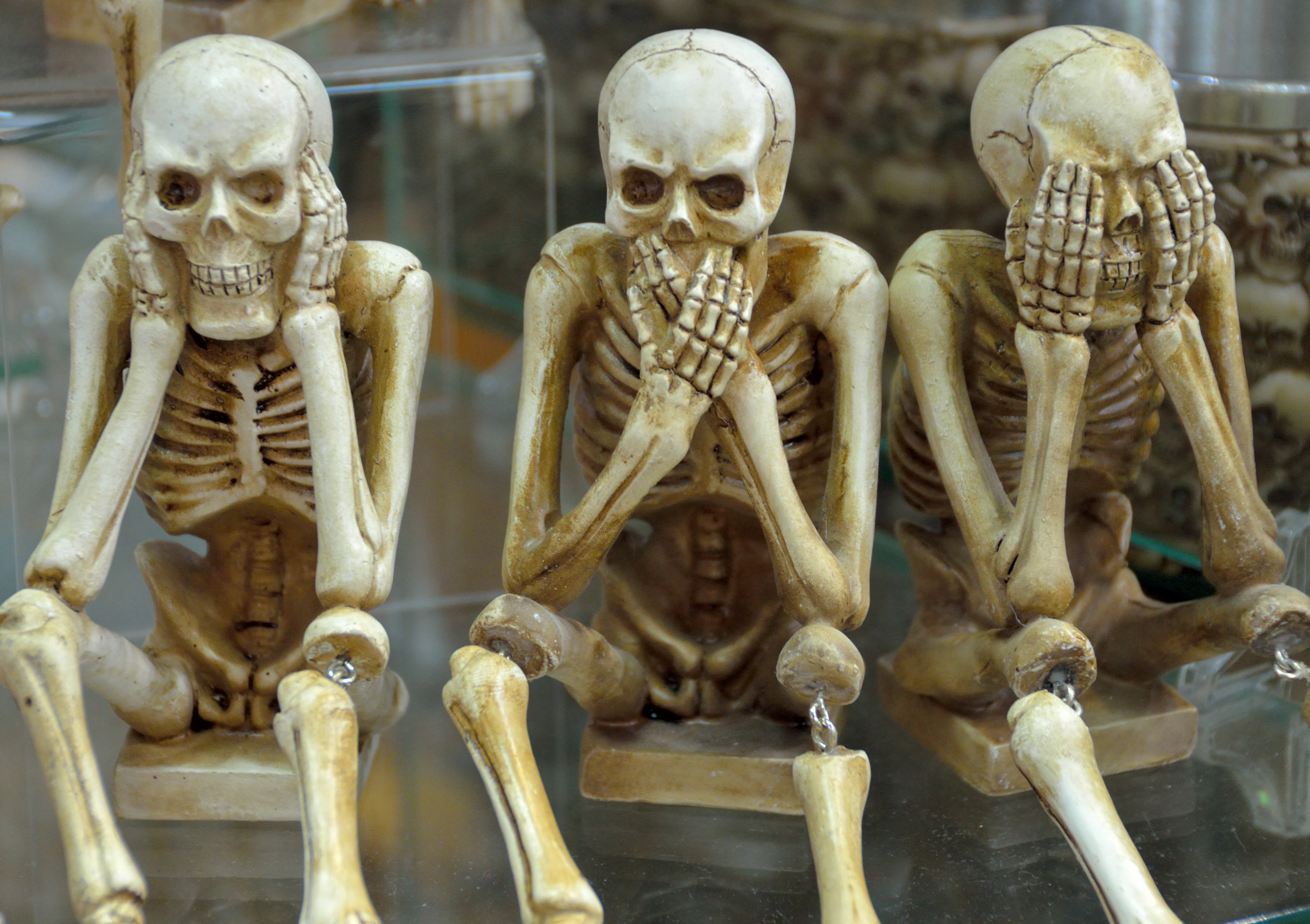 cuantos-huesos-cuerpo-humano