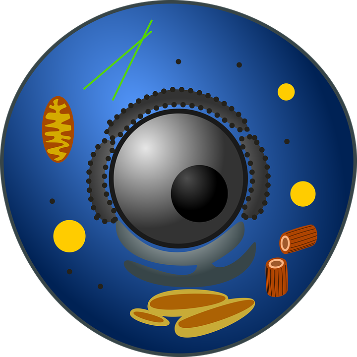 Estructuras celulares: Eucariotas y Procariotas