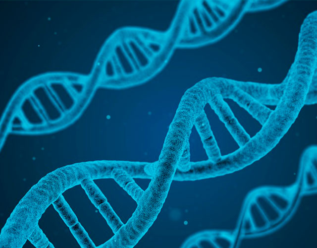 En que consiste la manipulación genética