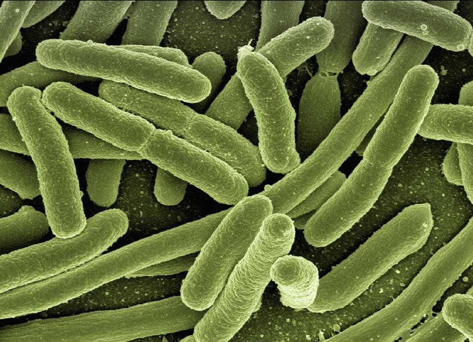 Que son las bacterias gram positivas