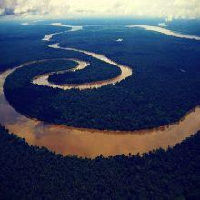 5-animales-que-solo-existen-en-el-amazonas