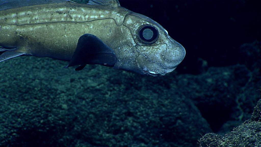 mayor-profundidad-oceanos