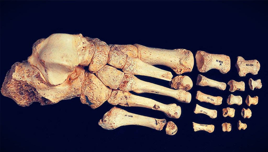 ¿Cuántos huesos tiene el pie?