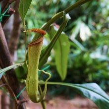 plantas-carnivoras-bonitas-mundo