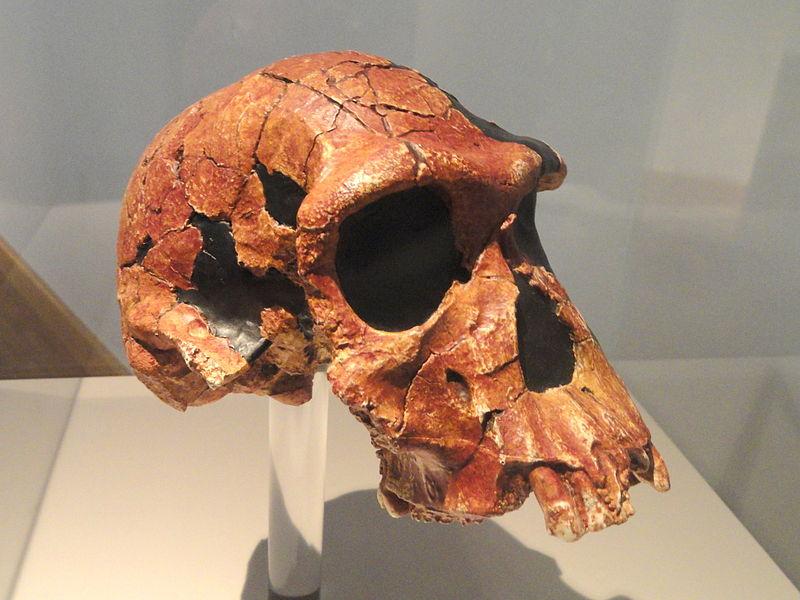 vivian-hombres-paleolitico