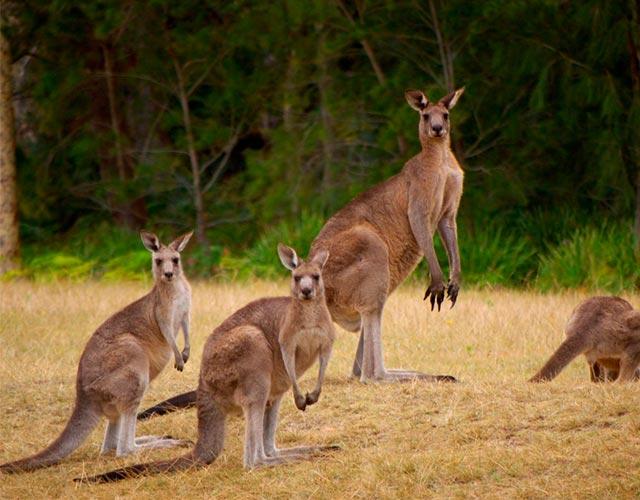 tradiciones de Australia