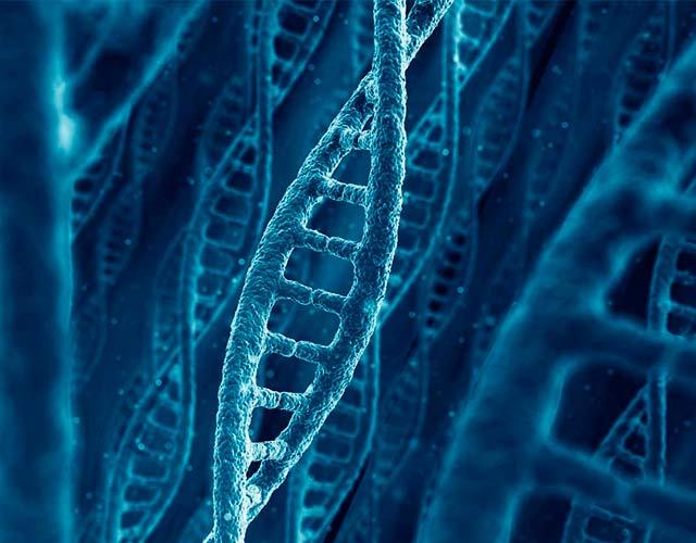 utilidades de la manipulación genética