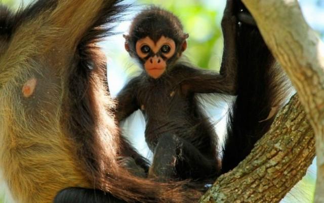 animales que viven en el Amazonas