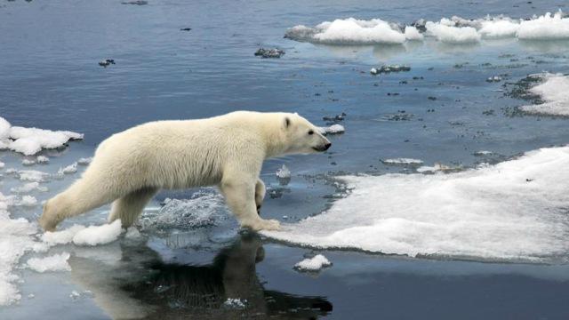 Curiosidades sobre el Polo Norte