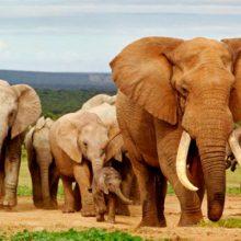 Los 8 animales más grandes del mundo