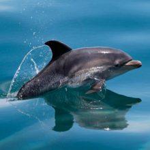 Curiosidades sobre los delfines