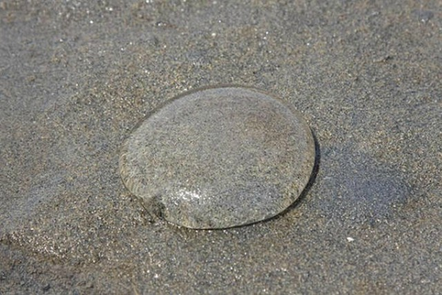 esferas transparentes