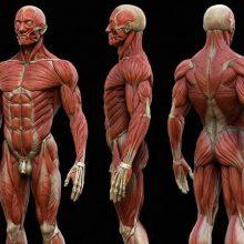 partes del cuerpo humano que no conocías