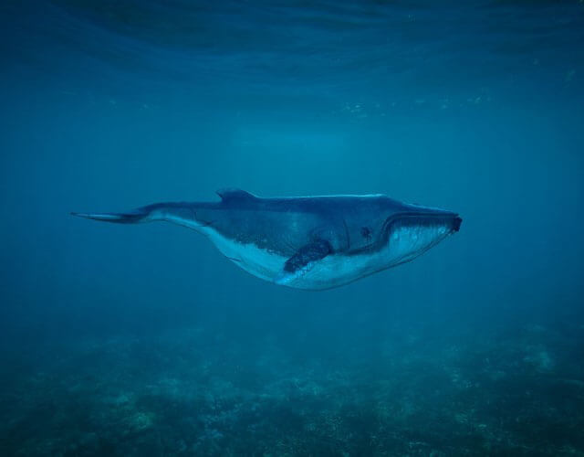 duermen las ballenas y los delfines