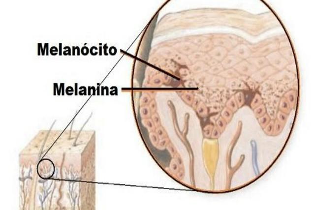 qué es la melanina
