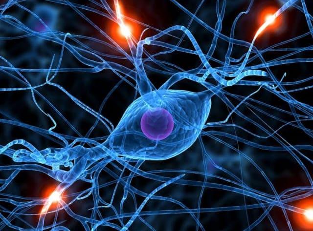 teoría celular