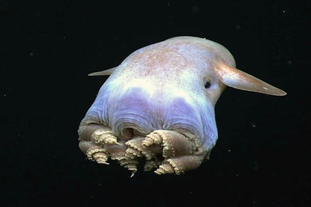 animales más extraños del mundo
