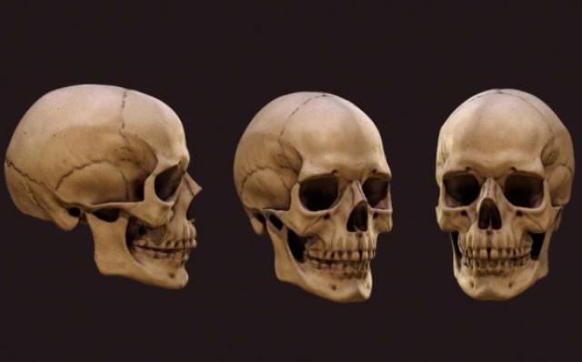 ¿Cuantos huesos tiene el cránero?