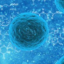 teoría de la endosimbiosis