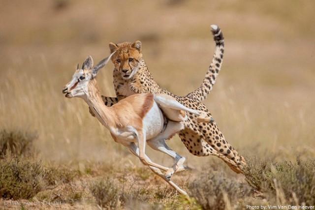 animal más rápido del mundo
