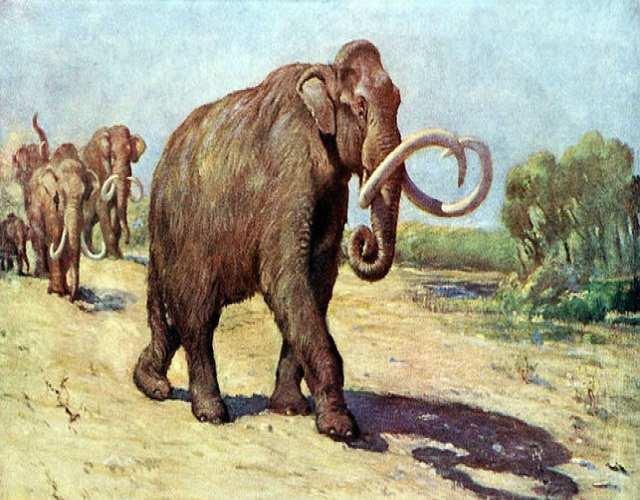 Algunos fascinantes animales extinguidos