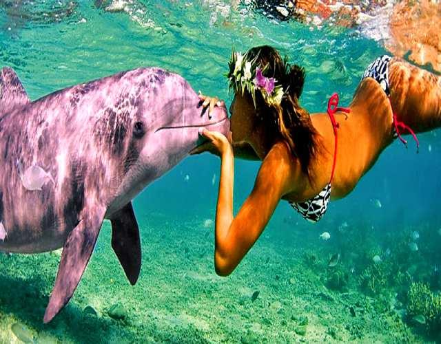 Curiosidades sobre el delfín rosa