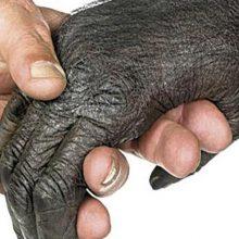 mano más antigua