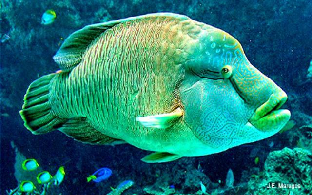 Los animales marinos en peligro de extinción
