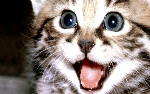 Los beneficios de ver vídeos de gatos