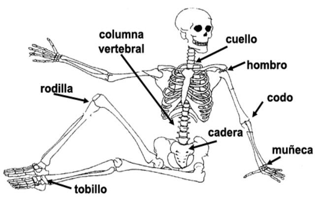 Los tipos de articulaciones del cuerpo