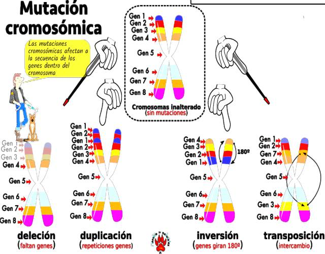 Mutación cromosómica