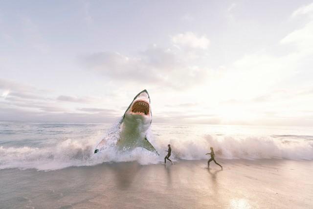 cómo sobrevivir al ataque de un tiburón