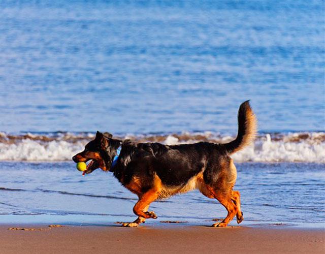 porque los perros mueven la cola