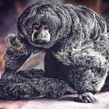 clases de monos