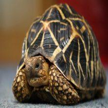 tortugas que dan miedo
