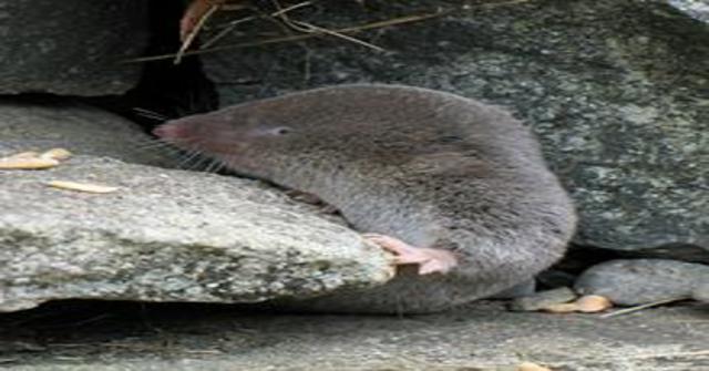 animales mamíferos venenosos