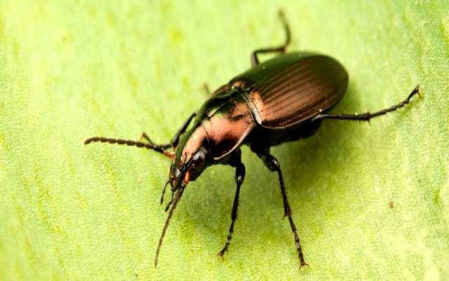 Cómo es el aparato respiratorio de los insectos