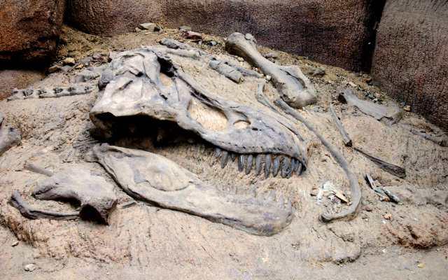 Como se encuentran los fósiles de dinosaurios