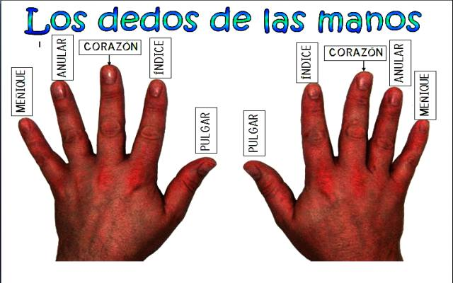Cuáles son los nombres de los dedos