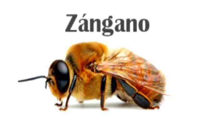 Curiosidades sobre la colmena de abejas