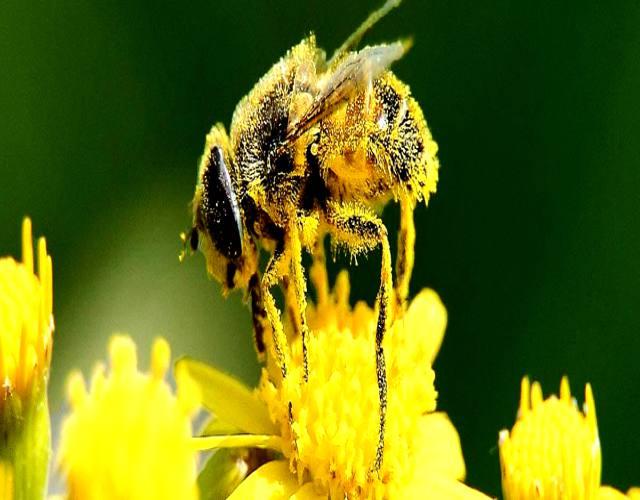 Curiosidades sobre la polinización de las flores