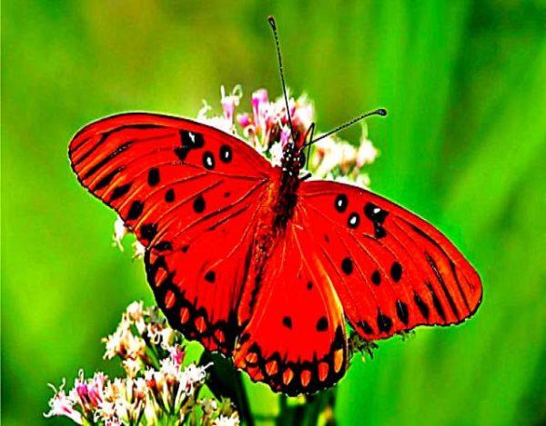 Datos interesantes sobre las mariposas