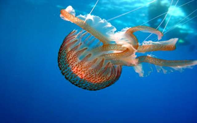Fascinantes animales acuáticos