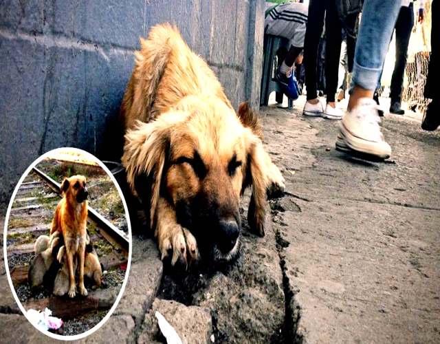 Sin perros callejeros En Holanda es así