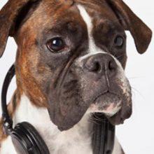 música en los animales