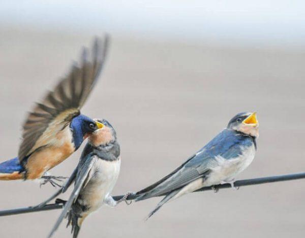 aves con más tiempo en el aire