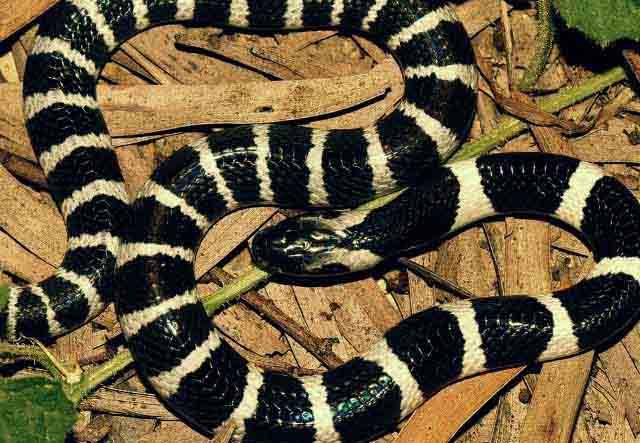 especies de reptiles