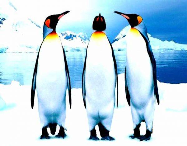 los pingüinos