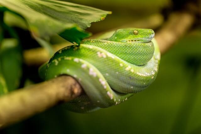 características de los reptiles